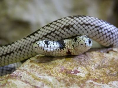 India per protestare contro la burocrazia libera serpenti for Quali sono i rettili