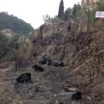 La zona bruciata di Poggio Anzù nell'Ascolano, dove sono precipitati i Tornado