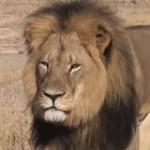 cecil_leone_zimbabwe