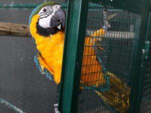 pappagallo_fg-kojh-1280x960produzione