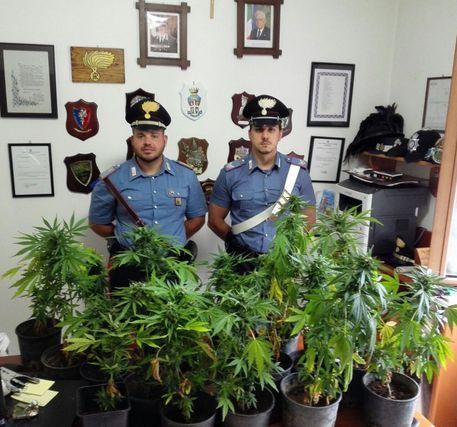 https://www.progettoitalianews.net/news/wp-content/uploads/2016/07/Marijuana.jpg