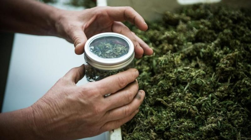 Cannabis, Usa investiranno 3 mln dollari per studi su dolore