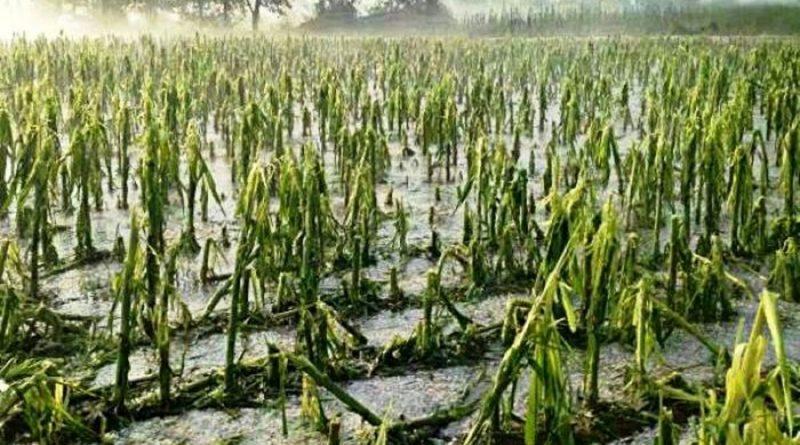 """Maltempo, Coldiretti: """"Sos semine primavera in campi allagati"""""""