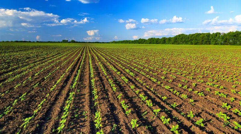 """Coronavirus, Cia-Agricoltori: """"Contributo per frutta e verdura"""""""