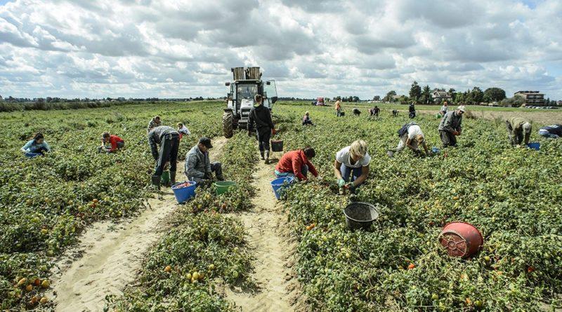 Agricoltura: Gdf scopre 62 lavoratori irregolari nel Mantovano