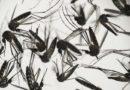 Brasile, +163% di morti per la dengue