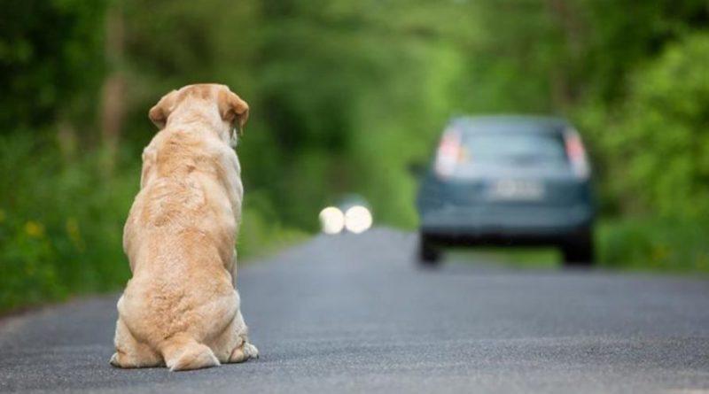 Diecimila euro di multa e rischio arresto per abbandono animali