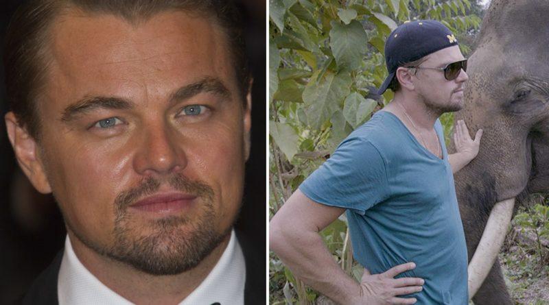 Leonardo DiCaprio ha donato 100 milioni di dollari per fermare la caccia