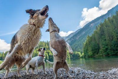 Patentino cani: Corso patentino 14 e 15 dicembre a Roma
