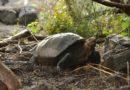 Galapagos: tolte 8 tonnellate di rifiuti