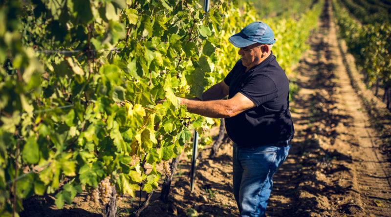 Covid-19, da Dorgali un'asta di vino benefica per combattere il virus
