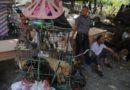 Cina vieta consumo carne di cani e gatti