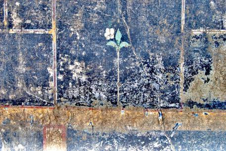 A Pompei il mistero della piccola Mummia