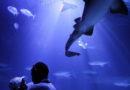 Australia: morto sub attaccato da uno squalo