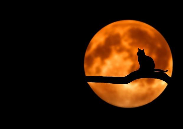 Appuntamento con la Luna Blu di Halloween DIRETTA ALLE 17,30