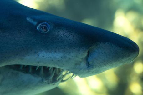La Colombia ha vietato la pesca artigianale e industriale degli squali nelle sue acque