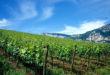 PAT – In arrivo 3 milioni di euro per il settore vitivinicolo ed enoturistico